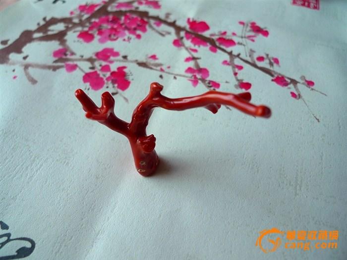 天然深海红珊瑚树枝摆件